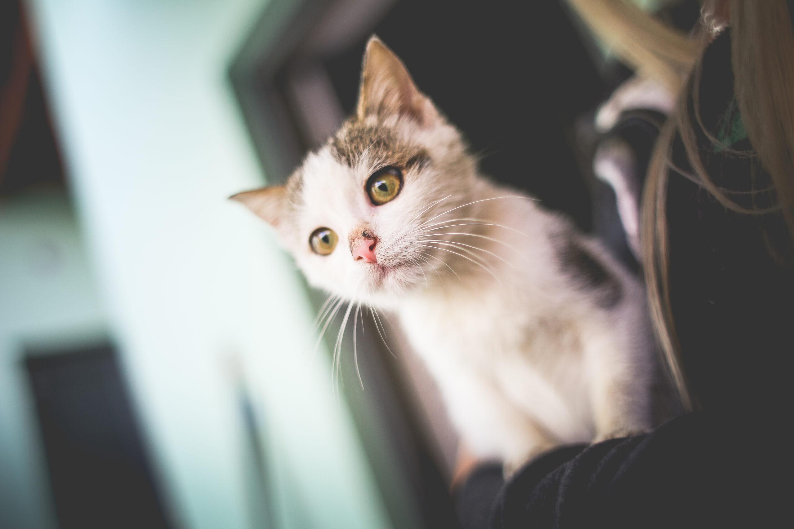slevové kódy i pro kočky